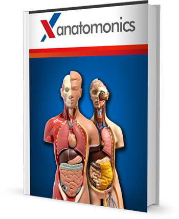 Memorize Anatomy With The Anatomy Mnemonics Audio Memorization